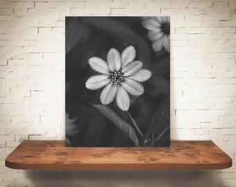 Flower Photograph - Fine Art Print - Black White Photo - Wall Art - Floral Decor - Wall Decor - Pictures of Flowers - Neutral Decor
