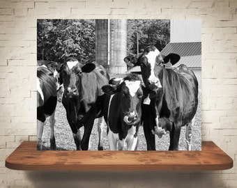 Cow Photograph - Fine Art Print - Black White Photography - Wall Art - Wall Decor -  Farm Pictures - Farmhouse Decor - Cows