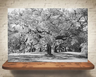 Tree Photograph - Fine Art Print - Wall Decor - Black & White - Southern Decor - Pictures of Trees - Landscape Photo - Moss Covered Trees