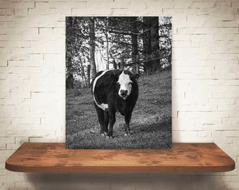 Cow Photograph - Fine Art Print - Black White Photography - Wall Art Decor - Wall Decor -  Farm Pictures - Farmhouse Decor - Cows - Country