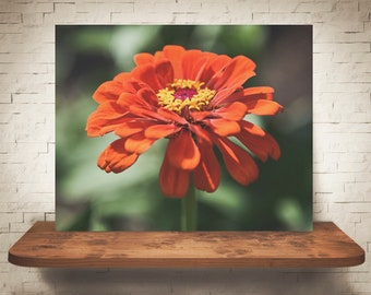 Orange Zinnia Photograph - Fine Art Print - Color Photo - Wall Art - Floral Decor - Wall Decor - Pictures of Flowers - Zinnias