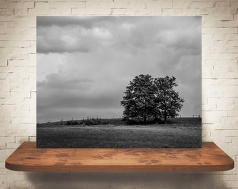 Tree Photograph - Stormy Landscape Photo - Fine Art Print - Black White Wall Decor - Nature Photography - Trees - Clouds - Sky - Moody