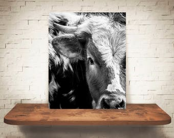 Longhorn Cattle Cow Photograph - Fine Art Print - Black White Photo - Wall Art - Rustic Decor - Wall Decor - Picture Cows - Farmhouse Decor