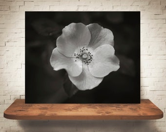 Wild Rose Photograph - Fine Art Print - Black White Photo - Wall Art - Floral Decor - Wall Decor - Pictures of Flowers - Roses - Wildflowers