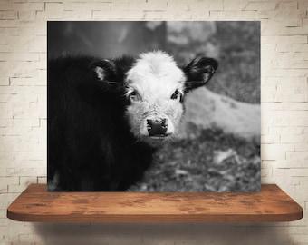 Calf Photograph - Fine Art Print - Black White Cow Photography - Wall Art Decor - Wall Decor -  Farm Pictures - Farmhouse Decor - Cows