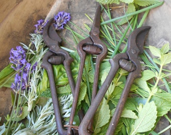 Three Vintage French Vine Pruning Tools. Genuine Vintners Pruning Shears. Authentic Vintage French Secateurs with Antique Patina.