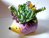 Hedgehog Succulent Arrangement With Butterfly, DIY Kit, Live Succulent Planter, Gift