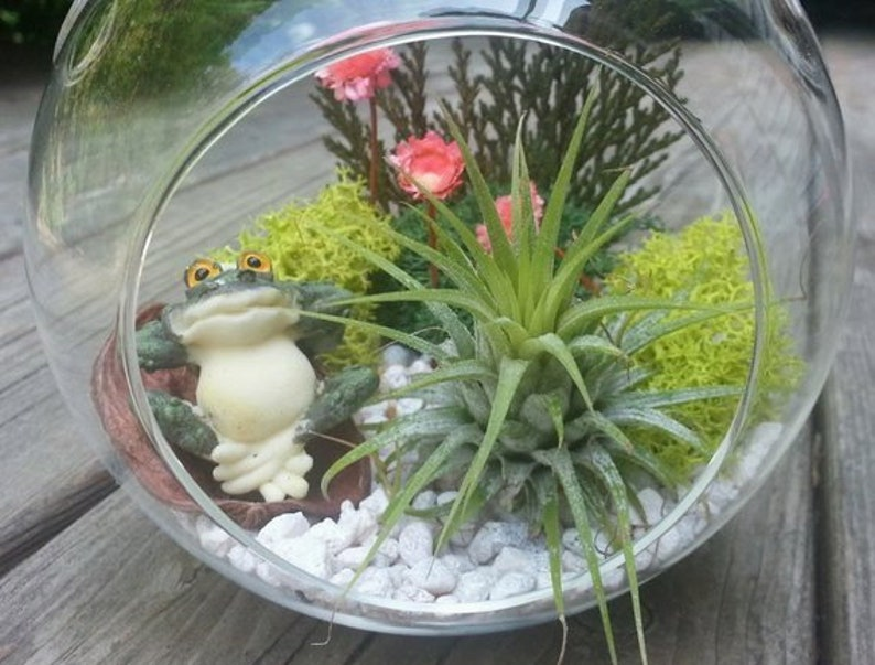 Air Plant Terrarium Kit With Frog 6 Glass Hanging Or Etsy