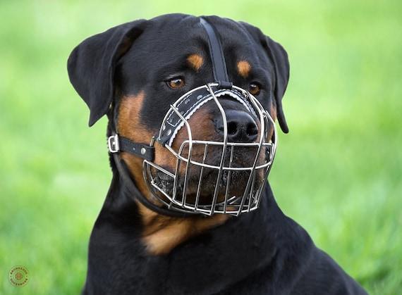 Angry Rottweiler Grande Borsa Moneta//titolare della carta di credito Nero