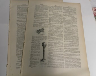 Large Vintage Dictionary Pages 50