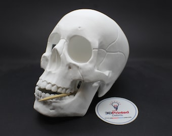 Human Skull with Jaw Bonehead by 3DKitbash