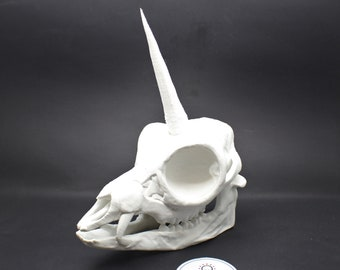 Unicorn Skull Bonehead by 3DKitbash