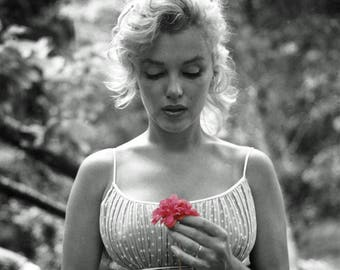 Marilyn Monroe - 1954 - Black and White - with Flower - Hollywood - Celebrity - Norma Jean - Beautiful - Icon - Woman - Pink - Photo - Art