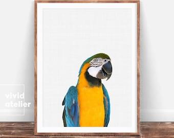 Parrot Print, Parrot Printable, Tropical Nursery, Tropical Bird Print, Tropical Decor, Bird Photography, Macaw Art, Tropical Bird Poster