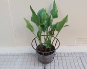 Vintage Metal Plant Pot Holder Stand