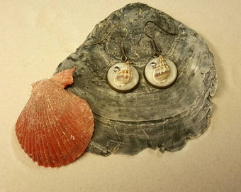Shell earrings earrings with shells and pearls in bronze