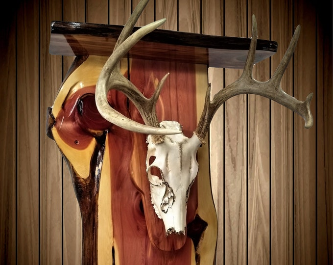 Whitetail Deer Skull Mount, European Style Rustic Knotty Cedar Wall Shelf, Reclaimed and Handcrafted, Cabin, Gift, FREE SHIPPING