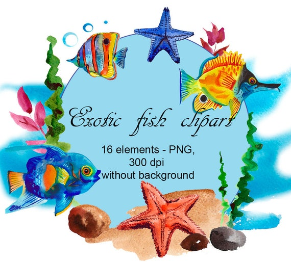 Exotic fish watercolor clipart fish digital images for etsy image 0 m4hsunfo