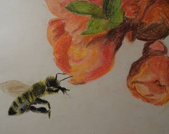 Pollination Soft Pastel Drawing