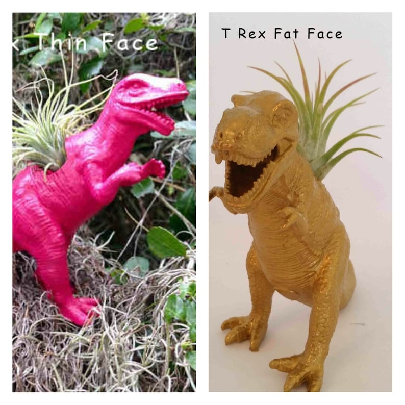Surprise Gift Best Friend Gift Birthday Gift Personalize Your Color /& Style  Dinosaur Planter Air Plant Gift Kid/'s Gift Desk Gift