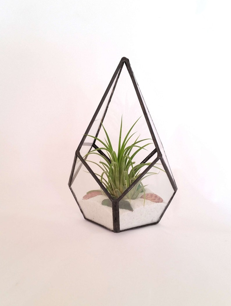 Glass Terrarium Black Metal Pyramid Ionantha Air Plant Etsy