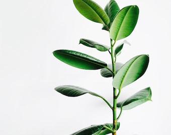 Printable Wall Art of a green plant.