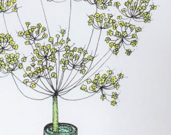 Flowering Fennel. A4 colour print from an original pen & watercolour drawing.