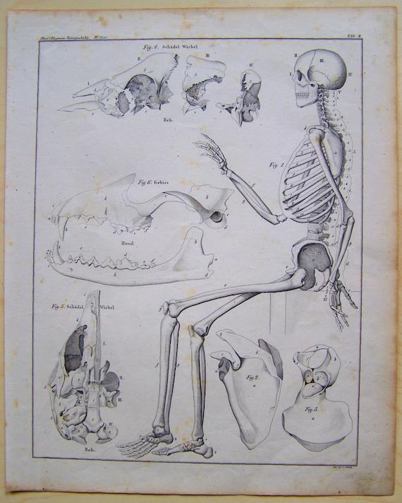 Esqueleto Doctor dibujo cartel anatomía humana de