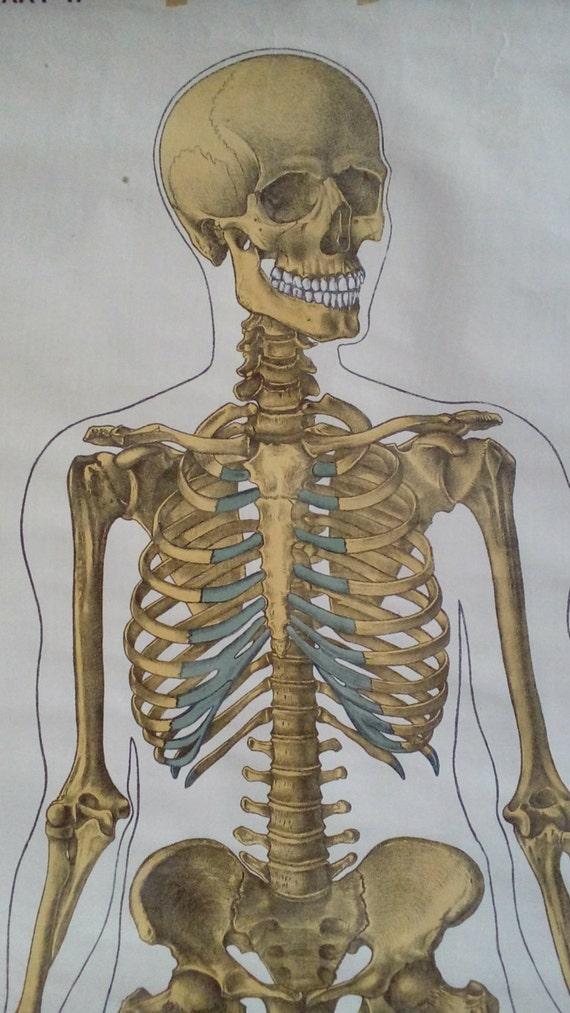 Skelett-Diagramm große Anatomie Poster Axial Skelett | Etsy