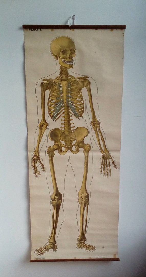 Skeleton Chart Large Anatomy Poster Axial Skeleton Etsy