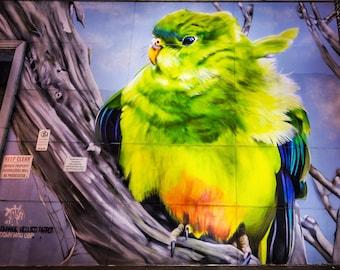 Graffiti Street Art, Wall Art Print, Melbourne Poster, yellow bird, spray paint art, photograph gift, teen girl room decor, best friend gift