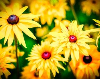 Yellow Daisy Print, Daisies photography, Flower Photo Background, Rīga Latvia, Floral Nursery Decor, Botanical Wall Art, Gift Idea for women