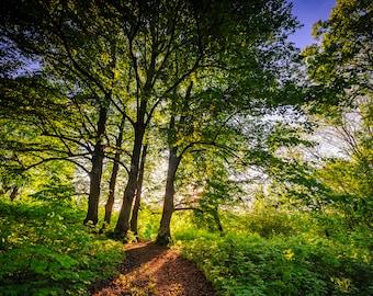 Latvian Photo, Forest Photography, Tervēte Nature Park, Rīga Latvija, Castle Hill, fairytale prints, fine art wall art, summer sunshine