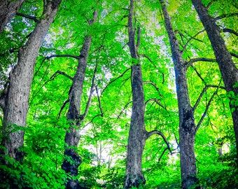 Latvian Photo, Tervēte Nature Park, Forest Photography, Rīga Latvija, Latvia fairytale decor, wall art canvas, Blue Herring, Travel Poster