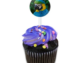 Colorful Parrot Cake Cupcake Toppers Picks Set