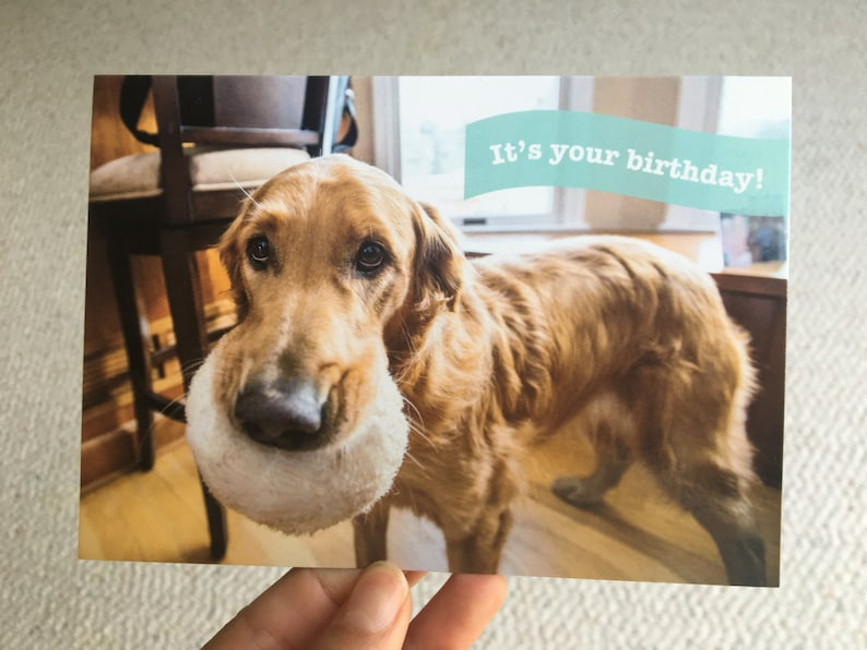 Cute Funny Birthday Card For The Dog Lover Friend
