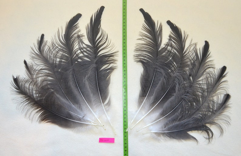 Lot of 5 matched pairs crane feathers for fly tying or crafts.