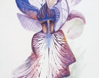 "Iris flower Original 11""x15"" watercolour ""Tiger"""