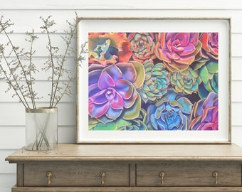 Succulents, print, 8x10 inch., aceo, rainbow echeveria, home decoration, living room, dining room, shabby chic, modern decor, contemporary.