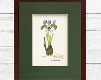 Digital Download Botanical Iris Flower Illustration