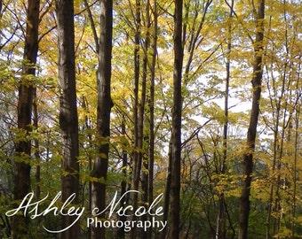 Trees Digital Image