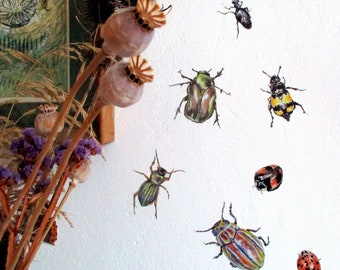 Beetle wall stickers, SET OF 7, bug wall decals, creepy crawly wall art, kids wall decor, etymology gifts