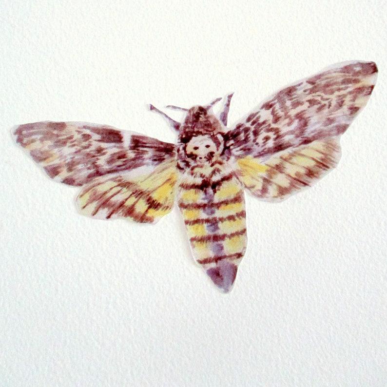 Motte Wandsticker Motte Abziehbilder Insekt Wandkunst | Etsy