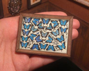 MINIATURE framed taxidermy . authentic victorian butterflies taxidermy. Doll decoration. oddities . video tutorial . DOWNLOAD 1:12 th