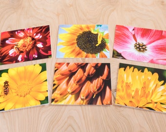 Summer Sunshine Color Photo Note Cards, Set of 6 Blank A2 Cards Featuring Orange, Yellow and Pink Flowers