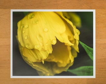 Photo Print of Yellow Tulip with Water Droplets from DebSladekPhotography