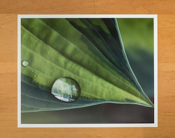 Photo Print of Green Hosta Leaf with Water Droplets from DebSladekPhotography