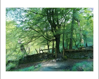 Greeting Card, greeting cards, greeting card pack, blank cards, stationery card, notecard, blank inside, A6, Spring woodland, stone wall