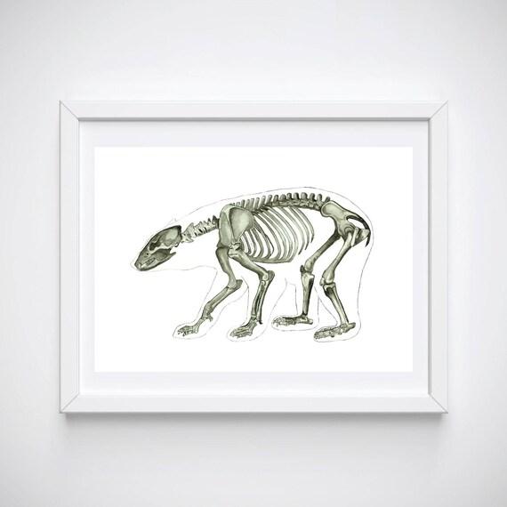Bär Print Tier Anatomie Kunst Grizzly braun polaren