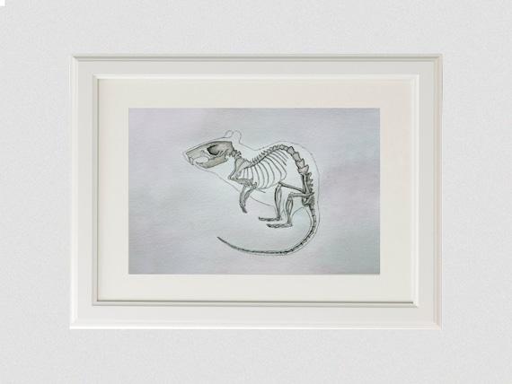 Aquarell Anatomie Malerei Ratte Skelett Originalvorlage Maus | Etsy